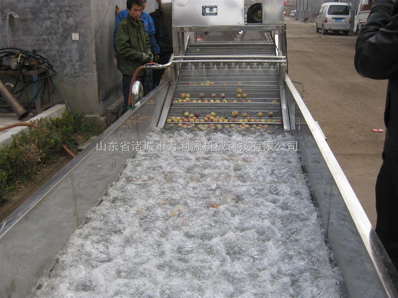 生产清洗机厂家/枸杞清洗机/香菇清洗机