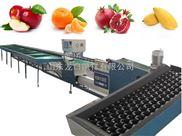 猕猴桃电子选果机,电脑苹果选果机价格