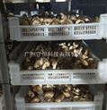蘑菇烘干機多少錢一臺 高效節能 廠家報價
