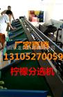XGJ-NM四川柠檬分选机  柠檬分选设备