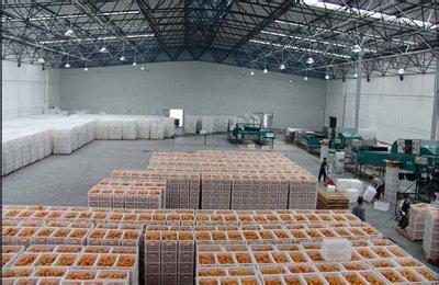水果保鲜冷库 台州 柑橘 冷库保鲜,100吨 柑橘 保