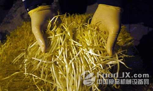嘌呤作用为调节豆芽生长